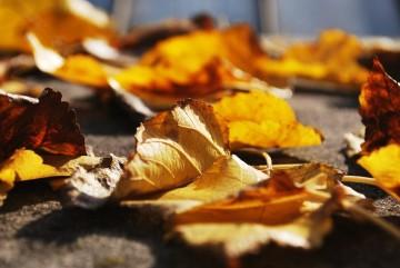 Jesen